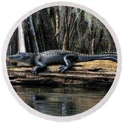 Alligator Sunning Round Beach Towel