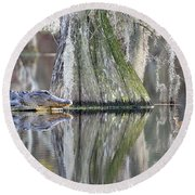 Round Beach Towel featuring the photograph Alligator Waiting For Dinner by Dan Friend
