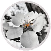 Almond Blossom Round Beach Towel