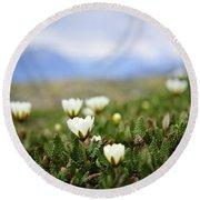 Alpine Meadow In Jasper National Park Round Beach Towel