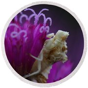 Ambush Bug On Tall Ironweed Round Beach Towel