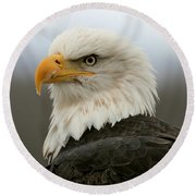 Round Beach Towel featuring the photograph American Bald Eagle Portrait by Myrna Bradshaw