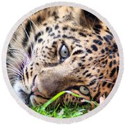 Round Beach Towel featuring the photograph Amur Leopard by Lynne Jenkins