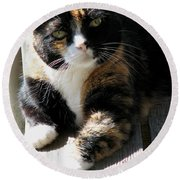 Round Beach Towel featuring the photograph Annie Banannie by Rory Sagner