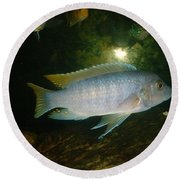 Round Beach Towel featuring the photograph Aquarium Life by Bonfire Photography