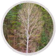 Aspen Tree Forest Road 249 Round Beach Towel