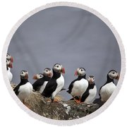 Atlantic Puffins On Cliff Edge Round Beach Towel by Greg Dimijian