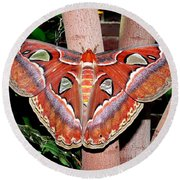 Atlas Moth Round Beach Towel