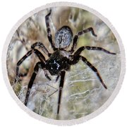 Australian Spider Badumna Longinqua Round Beach Towel