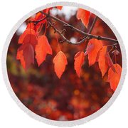 Autumn Leaves In Medford Round Beach Towel by Mick Anderson