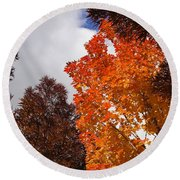 Autumn Looking Up Round Beach Towel by Mick Anderson