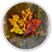 Round Beach Towel featuring the digital art Autumn Maple Leaf In Water by Debbie Portwood