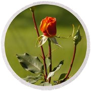 Autumn Rose Round Beach Towel by Mick Anderson