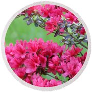 Round Beach Towel featuring the photograph Azalea by Andrea Anderegg