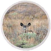 Round Beach Towel featuring the photograph Babe In Hiding by Lynn Bauer