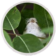 Baby Bird Peeping In The Bushes Round Beach Towel by Jeannette Hunt