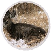 Round Beach Towel featuring the photograph Baby Deer At Rest by Nola Lee Kelsey