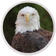 Round Beach Towel featuring the photograph Bald Eagle by Coby Cooper