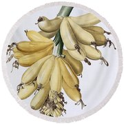 Banana Round Beach Towel by Pierre Joseph Redoute