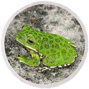 Barking Tree Frog Round Beach Towel