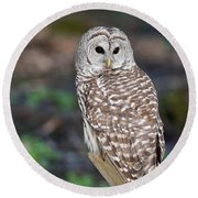 Round Beach Towel featuring the photograph Barred Owl by Les Palenik