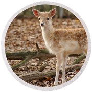 Round Beach Towel featuring the photograph Beautiful Fawn by Jean Haynes