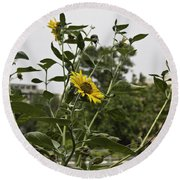 Round Beach Towel featuring the photograph Beautiful Yellow Flower In A Garden by Ashish Agarwal