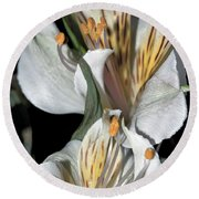 Round Beach Towel featuring the photograph Beauty Untold by Tikvah's Hope