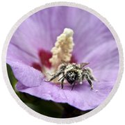 Bee Covered In Pollen  Round Beach Towel by Jeannette Hunt