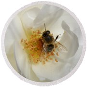 Round Beach Towel featuring the photograph Bee In A White Rose by Lainie Wrightson