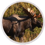 Round Beach Towel featuring the photograph Big Bull by Doug Lloyd
