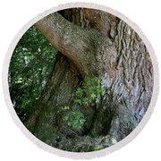 Round Beach Towel featuring the photograph Big Fat Tree Trunk by Lorraine Devon Wilke