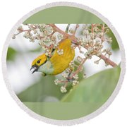 Bird With Berry Round Beach Towel