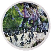 Birds At Cape St. Mary's Bird Sanctuary In Newfoundland Round Beach Towel