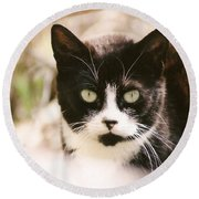 Black And White Feral Cat Round Beach Towel