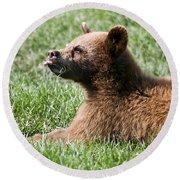 Black Bear Cub I Round Beach Towel