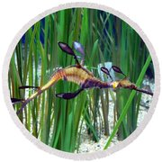 Round Beach Towel featuring the photograph Black Dragon Seahorse by Carla Parris