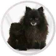 Black Pomeranian And Puppy Round Beach Towel