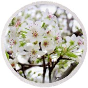 Round Beach Towel featuring the photograph Blooming Ornamental Tree by Kay Novy