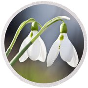 Blooming Snowdrops Round Beach Towel