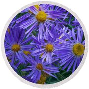 Blue Asters Round Beach Towel