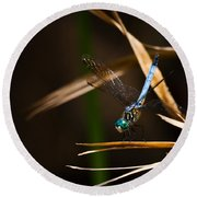 Blue Dasher Dragonfly Round Beach Towel