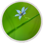 Round Beach Towel featuring the photograph Blue-eyed Grass by JD Grimes