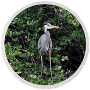 Round Beach Towel featuring the photograph Blue Heron In Tree by Dan Friend
