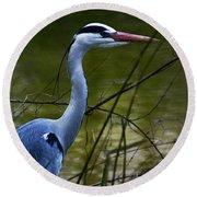 Blue Heron Vondelpark Amsterdam Round Beach Towel
