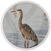 Blue Heron Wading Round Beach Towel