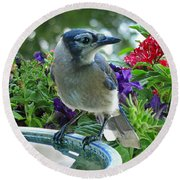 Round Beach Towel featuring the photograph Blue Jay At Water by Debbie Portwood