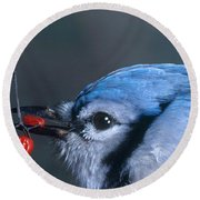 Blue Jay Round Beach Towel by Photo Researchers, Inc.