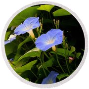 Round Beach Towel featuring the photograph Blue Morning Glories by Kay Novy