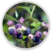 Blueberry Bunch With Raindrops Round Beach Towel by Sharon Talson
